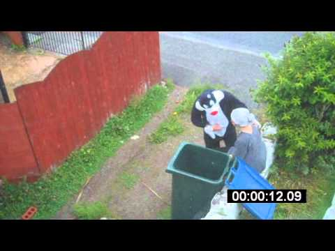 Cat, unaware of video camera, drops middle-aged woman into a 'wheelie bin'