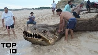 Top 10 Scary Prehistoric SEA Monsters