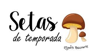 TEMPORADA DE SETAS EN PARADIS MADRID