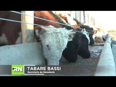 Tabaré Bassi, creditos