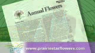 Beautiful Flowers Start with Plants Adapted for Kansas