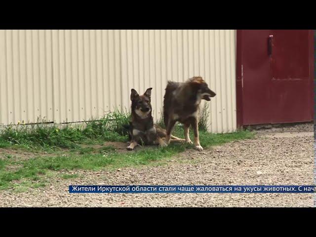 В Иркутской области стали чаще кусаться собаки