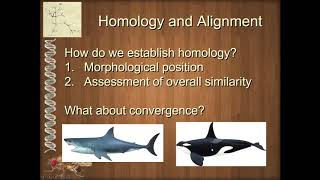 Unit 1 3 1 Introduction to Homology