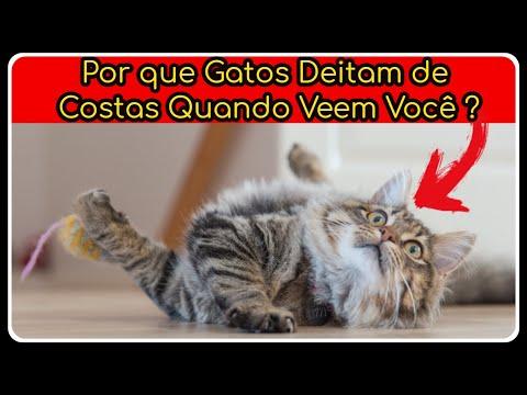 Por que Gatos Deitam de Costas Quando Veem Voc -  GATO