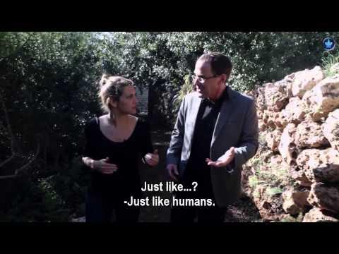 עד כמה בני האדם דומים לצמחים?
