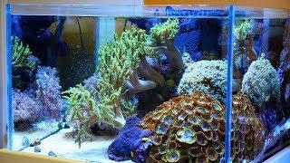 ZEOvit Reef Tank - Most Popular Videos