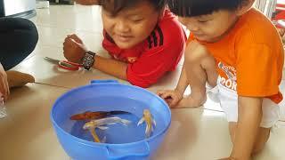 Bé Tin Xem Con Cá Chép Cảnh & Con Ba Ba