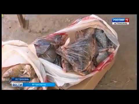 О рейде Россельхознадзора по несанкционированным местам продажи рыбы в городе Астрахани