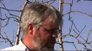 UMass Video Fruit Advisor - April 18, 2008