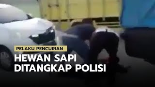 Viral Video Aksi Polisi Gagalkan Pencurian Sapi Antar Kota, Ditangkap di Exit Tol Tingkir