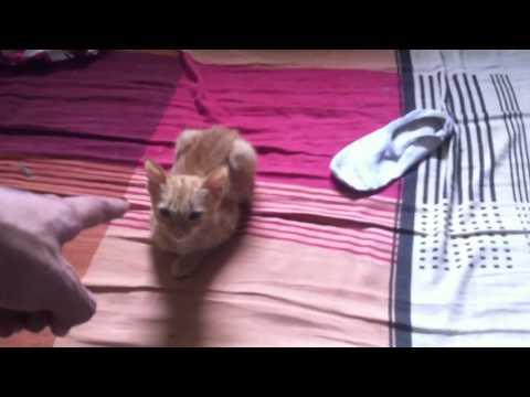Thanh niên tự kỷ với mèo