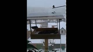Птичья столовая (кормушка)