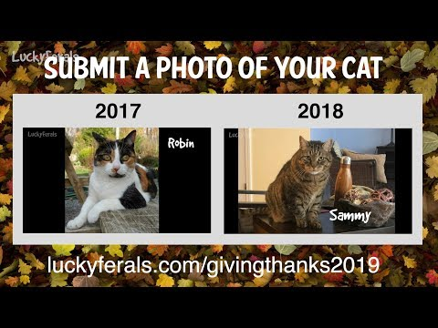 Submit A Photo Of Your Cat For The Lucky Ferals Thanksgiving Special!