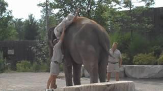 Как быстро забраться на слона