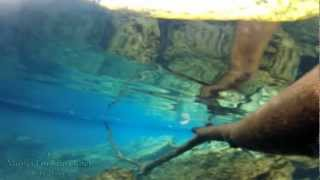 preview picture of video 'Matevulu Blue Hole on Santo Island, Vanuatu Near Champagne Beach: GoPro Hero2'