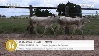 30 BEZERRAS NELORE