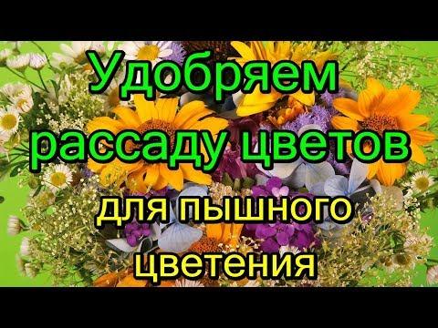 Удобряем рассаду цветов, для пышного цветения.