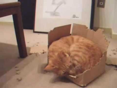 貓咪的全能住宅改造!超可愛!