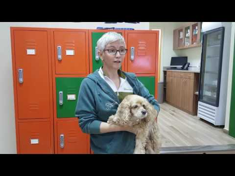 Video Immune Mediated Polyarthritis in a Dog   Ouch!