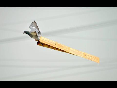 【文化資產時光機】尋找遺忘的翅膀--頂山大潭長笭復育影像紀錄--(中)