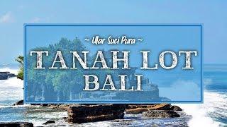 Ular Suci Penjaga Pura Tanah Lot Bali, Tiga Kali Lebih Beracun dari Kobra