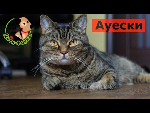 Насколько опасна болезнь Ауески для собак и кошек. Стоит ли кормить животных сырой свининой?