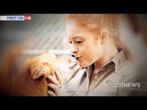 Dingo Attack | 9 News Perth