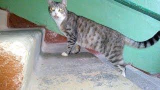 Кот говорит дай пройти