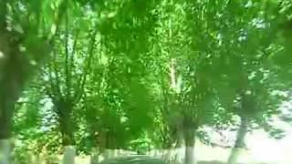 preview picture of video 'Le tunnel botanique d'El-Kseur'