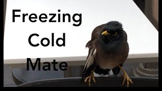 Freezing cold weather in Australia.