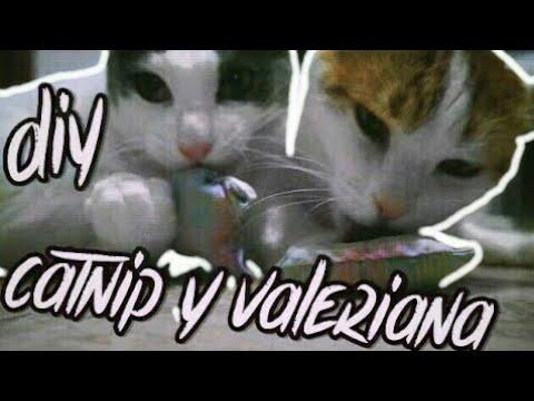 DIY Juguetes para gatos con CATNIP y VALERIANA fáciles de hacer | Anabel Golop