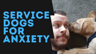 Emotional Support Animal or Service Animal for Anxiety? (Differences + How to Get One)