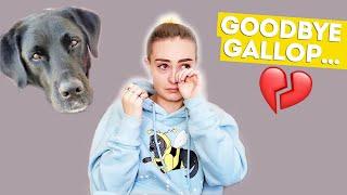 My Guide Dog Retirement Plan + My Next Dog… *very emotional*