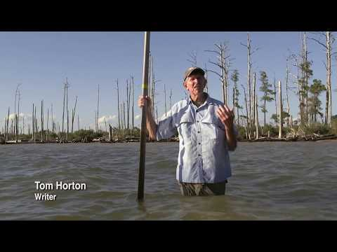 Frightening sea level rise in Maryland