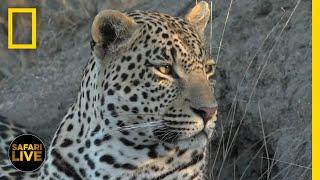 Safari Live - Day 238 | National Geographic
