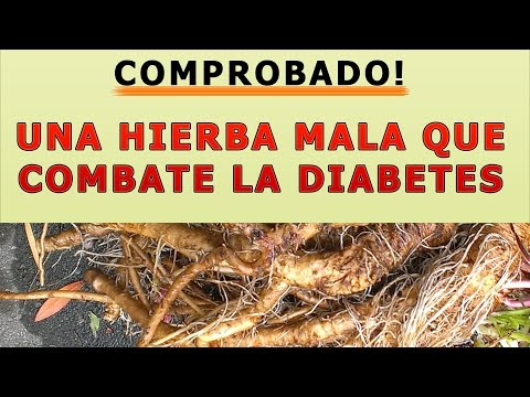 Medicamentos con HSA de la diabetes tipo 1