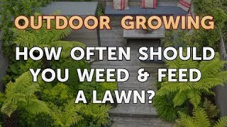 How Often Should You Weed & Feed a Lawn?