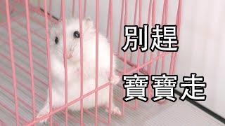 【Whale】倉鼠別墅的日常打掃