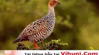 Tiếng chim đa đa mồi kêu file mp3 tải về máy để bẫy cực chuẩn tại vihuni.com