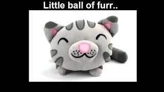 Soft kitty warm kitty little ball of furr happy kitty..