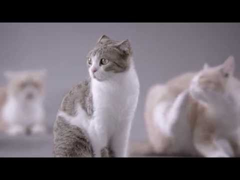 Kotex Commercial (2014) (Television Commercial)