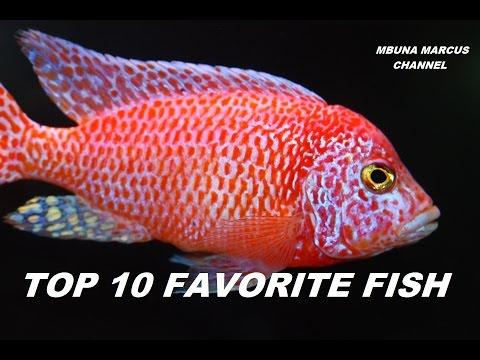 TOP 10 FRESHWATER AQUARIUM FISH