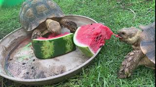 Summer Snack with Snail and Slowpoke