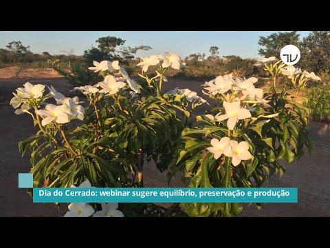 Dia do Cerrado: Webinar sugere equilíbrio, preservação e produção - 10/09/20