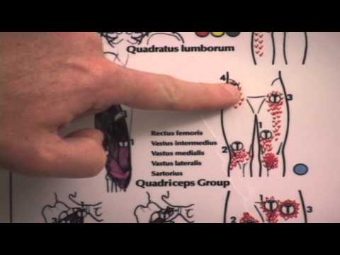 Video Front of Knee and Lower Back Pain Treatment for Tight Quadriceps Muscles Cycling or Running