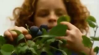 Monty Don Gardening
