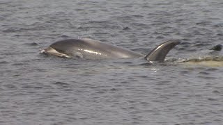 """Hard to Watch"": Dolphins trapped by ice in Newfoundland harbour"
