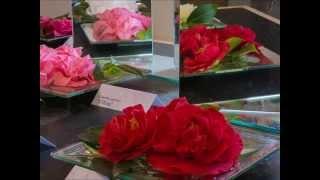 preview picture of video 'Im Kamelienschloss Pirna Zuschendorf'