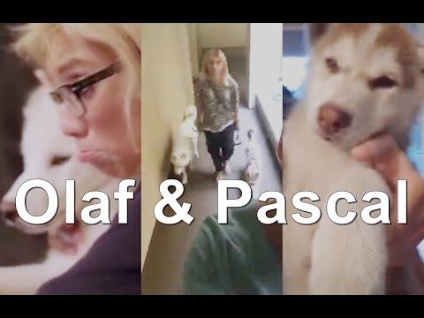 Olaf & Pascal (Kirstin Maldonado)