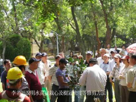青年公園水黃皮樹木修剪示範
